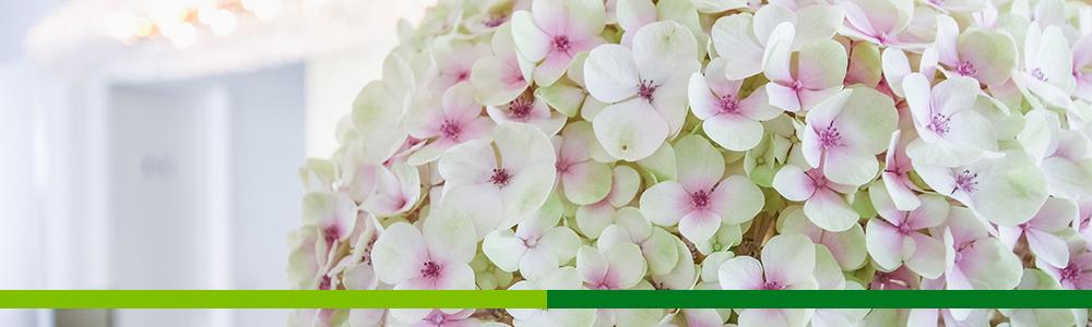 Praxis Sonja Merkle Blumen Empfang